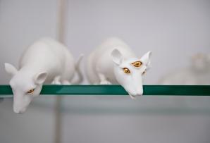 Wook Jae Maeng Mice on glass shelves